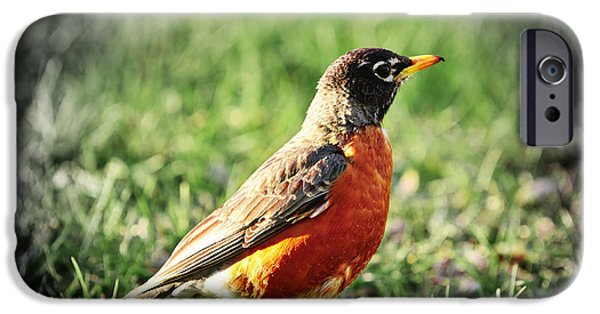 Animals Photographs iPhone Cases - Robin iPhone Case by Elena Elisseeva