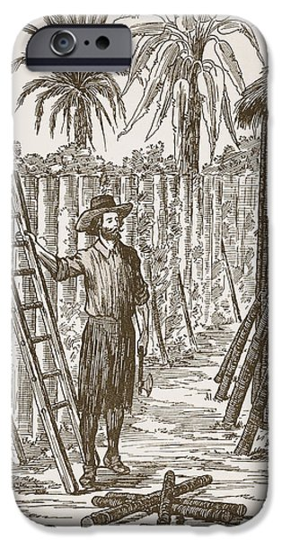 Fence Drawings iPhone Cases - Robinson Crusoe building his bower iPhone Case by English School