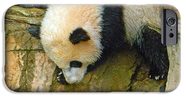 Smithsonian iPhone Cases - Rock Climbing - Baby Bao Bao To The Rescue iPhone Case by Emmy Marie Vickers