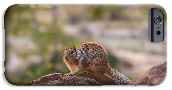 Bushy Tail iPhone Cases - Rock Squirrel in Zion iPhone Case by Robert Bales