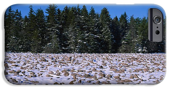Snow Scene iPhone Cases - Rocks In Snow Covered Landscape iPhone Case by Panoramic Images