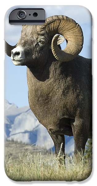 Rocky Mountain Big Horn Sheep iPhone Case by Bob Christopher
