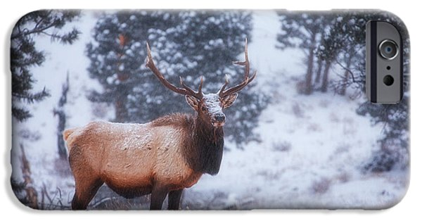 Snow Scene iPhone Cases - Rocky Mountain Elk iPhone Case by Darren  White