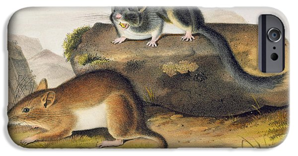 Rocks Drawings iPhone Cases - Rocky Mountain Neotoma iPhone Case by John James Audubon