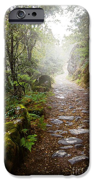 Rain iPhone Cases - Rocky trail in the foggy forest iPhone Case by Carlos Caetano