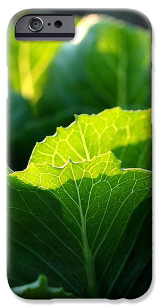 Romaine Study iPhone Case by Angela Rath