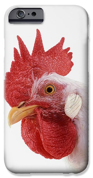 Rooster iPhone Case by Thomas Kitchin & Victoria Hurst