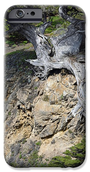Point Lobos State iPhone Cases - Rooted on the Edge iPhone Case by Bruce Gourley