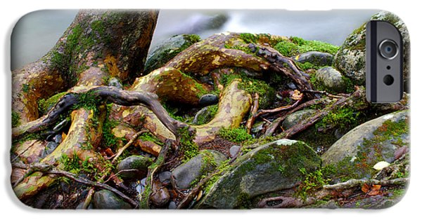 Tree Roots iPhone Cases - Roots By The Stream iPhone Case by Nancy Mueller