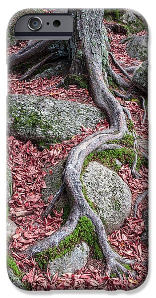 Roots iPhone Case by Edward Fielding