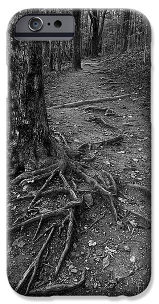 Tree Roots iPhone Cases - Roots II iPhone Case by Sean Cupp