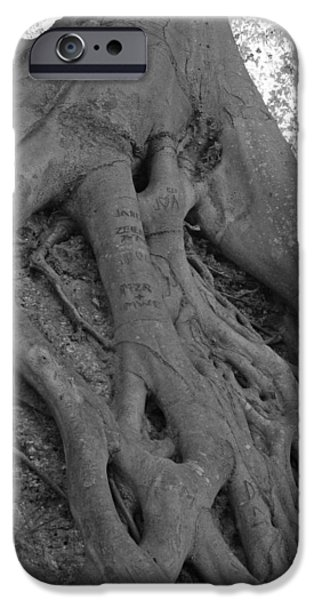 Tree Roots iPhone Cases - Roots II iPhone Case by Suzanne Gaff