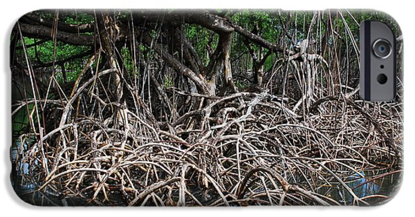 Mangrove Forest iPhone Cases - Roots Netting iPhone Case by Karin Stein