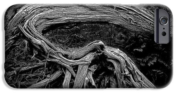 Tree Roots iPhone Cases - Roots of a Fallen Tree by WaWa Ontario in Black and White iPhone Case by Randall Nyhof