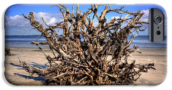 Chrystal iPhone Cases - Roots on Jekyll Island iPhone Case by Chrystal Mimbs