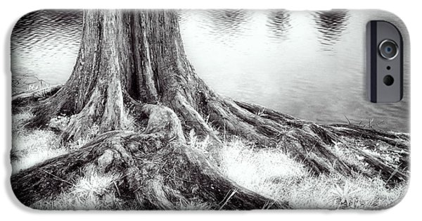 Tree Roots iPhone Cases - Roots Run Deep - Greensboro NC iPhone Case by Dan Carmichael