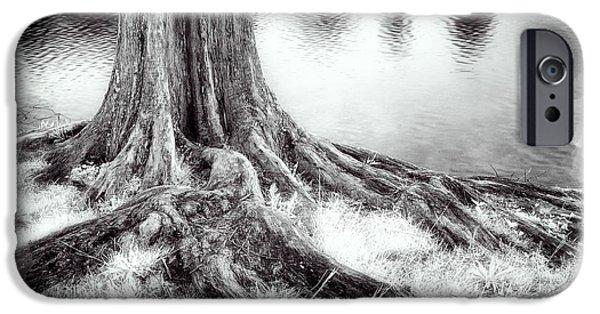 Tree Roots iPhone Cases - Roots Run Deep - Greensboro NC II iPhone Case by Dan Carmichael