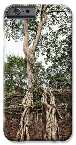 Tree Roots iPhone Cases - Roots Ta Prohm III iPhone Case by Chuck Kuhn