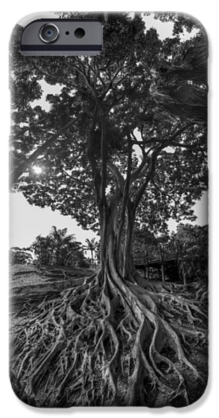 Black And White iPhone Cases - Roots to Roof iPhone Case by Scott Campbell