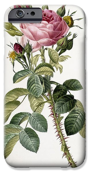 Florals iPhone Cases - Rosa Bifera macrocarpa iPhone Case by Pierre Joseph Redoute
