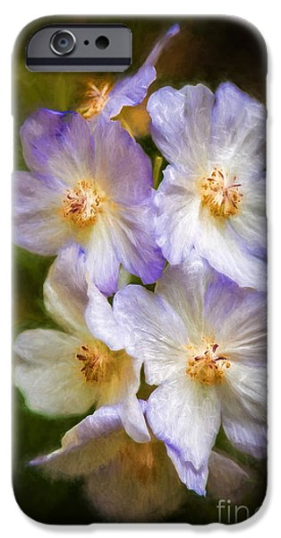 Dogs iPhone Cases - Rosa canina iPhone Case by Gene Healy