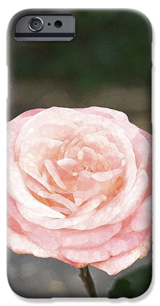Rose 195 iPhone Case by Pamela Cooper