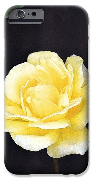 Rose 196 iPhone Case by Pamela Cooper