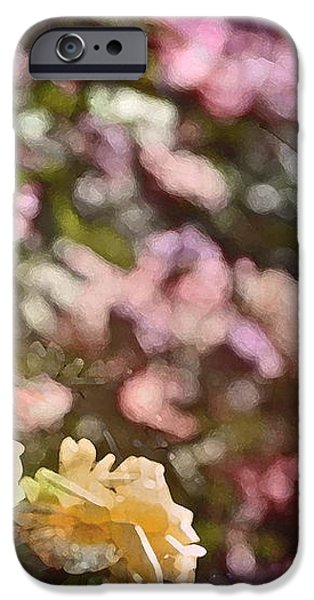 Rose 209 iPhone Case by Pamela Cooper