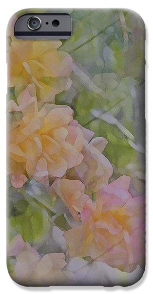 Rose 213 iPhone Case by Pamela Cooper