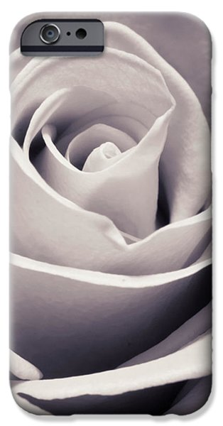 Flora Photographs iPhone Cases - Rose iPhone Case by Adam Romanowicz