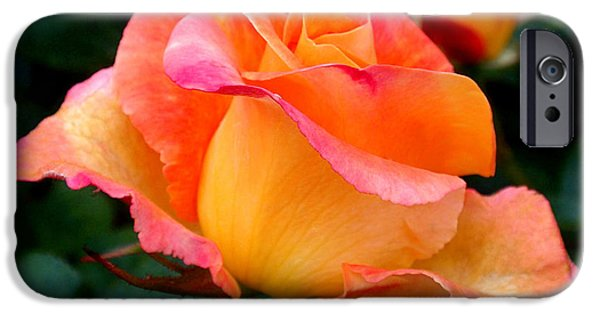 Florals Photographs iPhone Cases - Rose Beauty iPhone Case by Rona Black