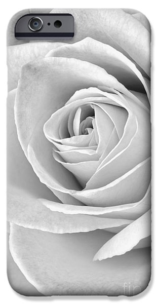 Close Up Floral iPhone Cases - Rose Black and White iPhone Case by Edward Fielding