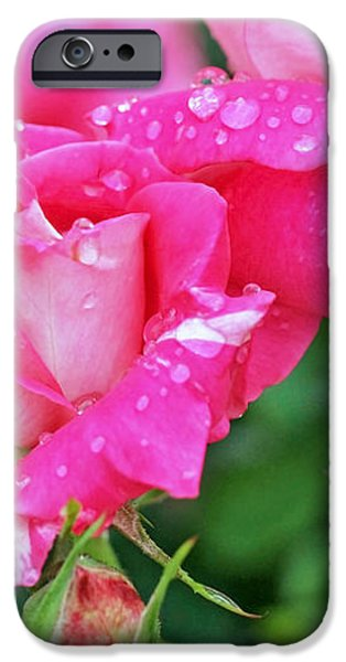 Rose Bonbons iPhone Case by Rona Black