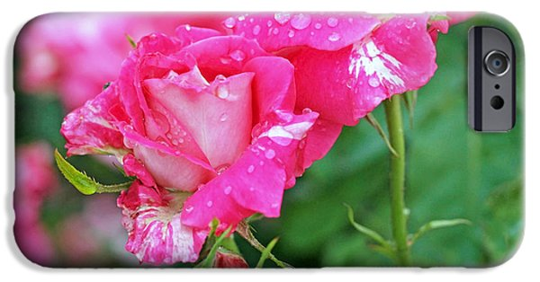 Rain iPhone Cases - Rose Bonbons iPhone Case by Rona Black