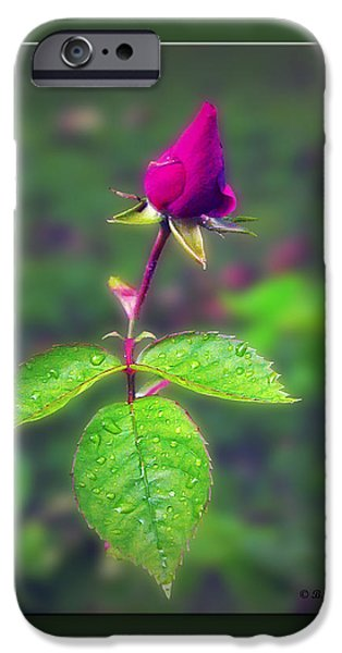 Rose Bud iPhone Case by Brian Wallace