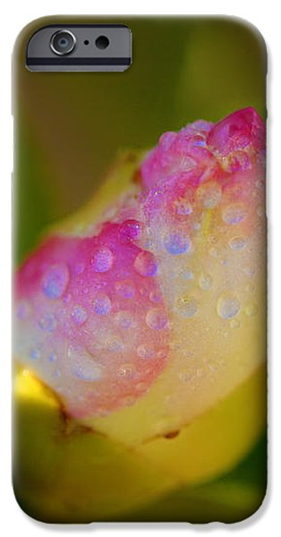 Rose Bud iPhone Case by Cheryl Young