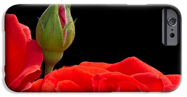 Young iPhone Cases - Rose Bud iPhone Case by Wim Lanclus