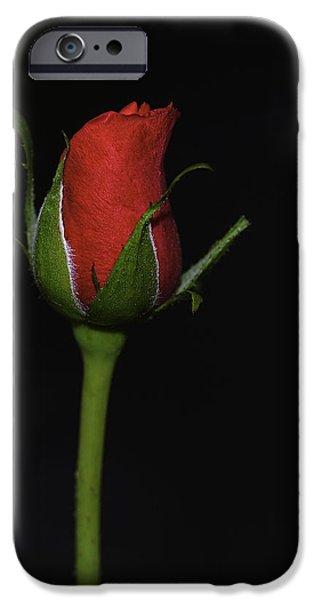 Arkansas iPhone Cases - Rose Bud iPhone Case by William Jobes