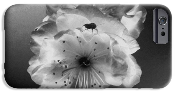 Airbrush Drawings iPhone Cases - Rose Bug iPhone Case by TLynn Brentnall
