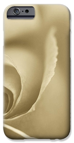 Rose Close Up - Gold iPhone Case by Natalie Kinnear