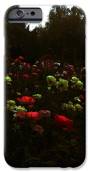 Lucy D iPhone Cases - Rose Garden iPhone Case by Lucy D
