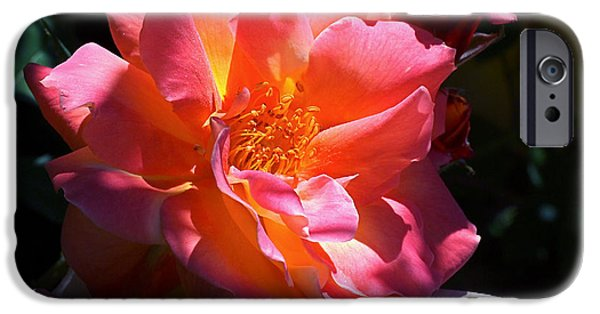 Pink Roses iPhone Cases - Rose Glow iPhone Case by Rona Black