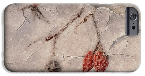 Wintertime Mixed Media iPhone Cases - Rose Hip iPhone Case by Jana Behr
