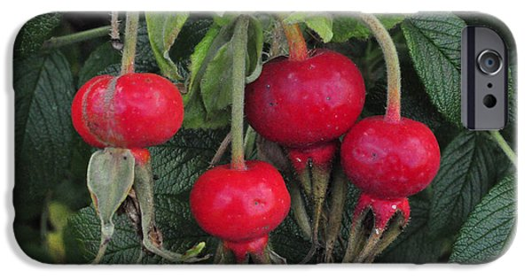 Berry iPhone Cases - Rose Hips iPhone Case by Roger Reeves  and Terrie Heslop