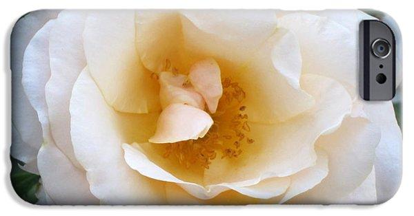 Innocence iPhone Cases - Rose in the Garden iPhone Case by Lena Kouneva