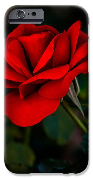 Rose Is A Rose iPhone Case by Robert Bales