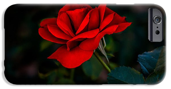 Haybale iPhone Cases - Rose Is A Rose iPhone Case by Robert Bales