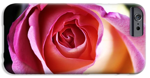 Close Up Floral iPhone Cases - Rose iPhone Case by John Rizzuto