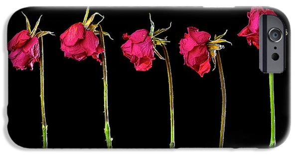 Leaning Pyrography iPhone Cases - Rose Lineup iPhone Case by Mauro Celotti