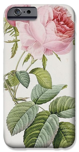 Pink Roses iPhone Cases - Rose iPhone Case by Pierre Joesph Redoute